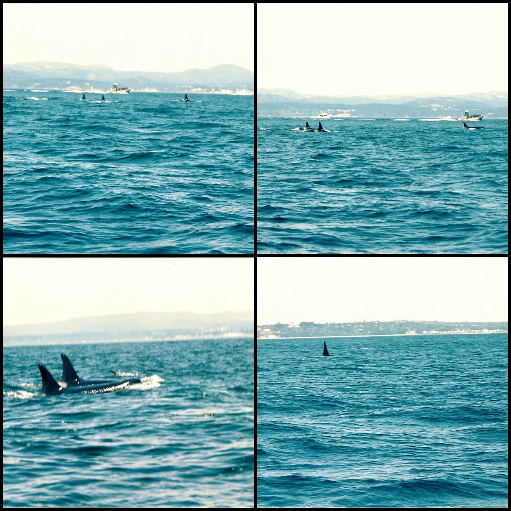 Whale Collage 2